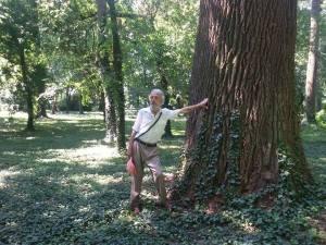 Драган Симовић: У свету дрвета и вилењака