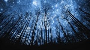 4-_-sky_trees_forest_hill_mountaun_silhouette_stars_manipulation-4-_cg_digital_art_bright_starlight_1920x1080