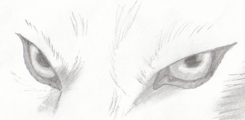 Wolf_eyes_by_Cunnucks_Eh