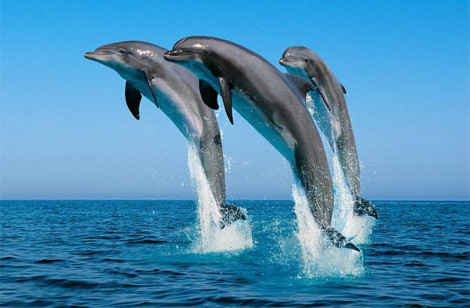 Delfini.jpg