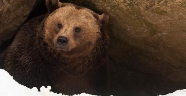 bear-cave.jpg