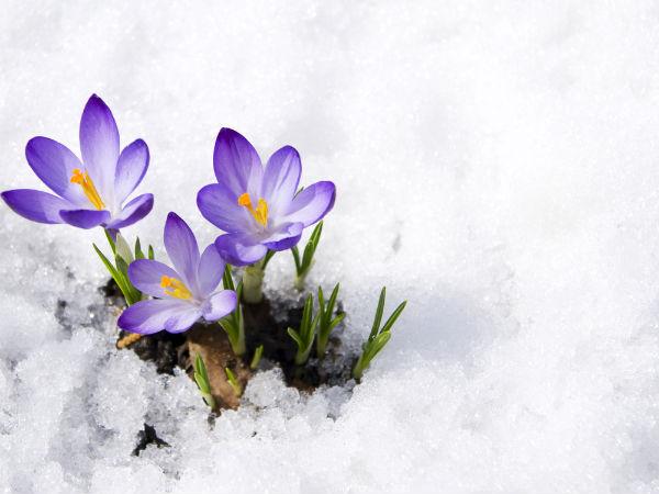 x26-winterflowers.jpg.pagespeed.ic_.zPYgsTn8Ge.jpg